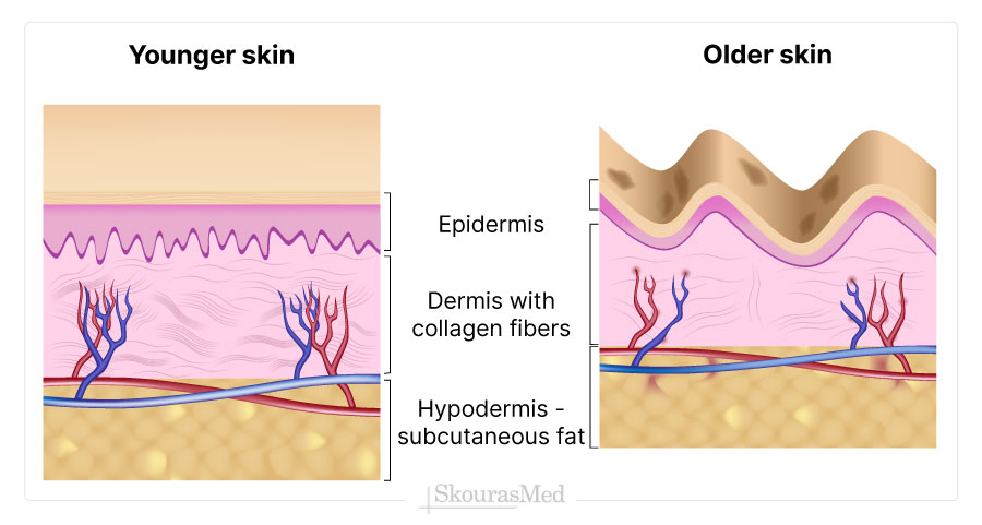 The Appearance of the Aging Skin