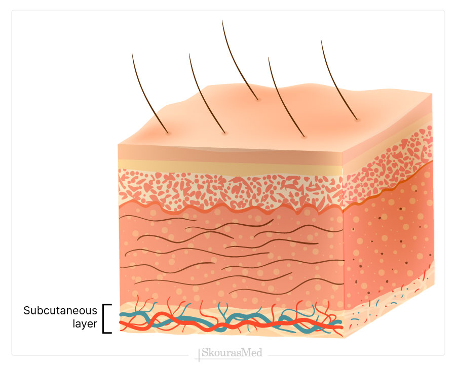 Subcutaneous layer